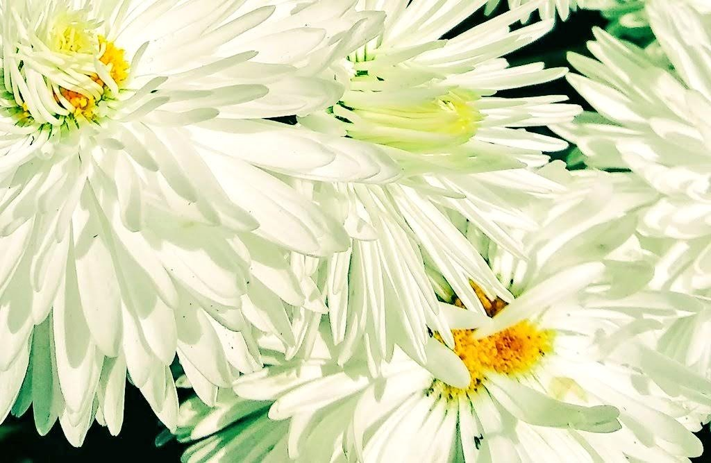 happiness blooms from within   unknown  #MyPhoto #photography #photooftheday #PhotosOfMyLife #nature #sunshine #sunnyday #StayAlert  #stayhealthyandhappy #MentalHealthAwareness #selfcare  #SaturdayThoughtspic.twitter.com/rKKRwjGqCI