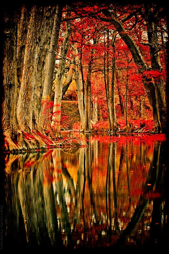 Magic wood #photos #nature #wood #SaturdayPhotospic.twitter.com/QUlw6uT5ym