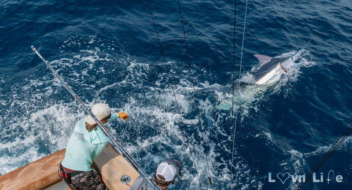 Port Aransas, TX - Team Qualified released 5 Blue Marlin (500) a Sailfish and a Swordfish over 1 1/2 Days.