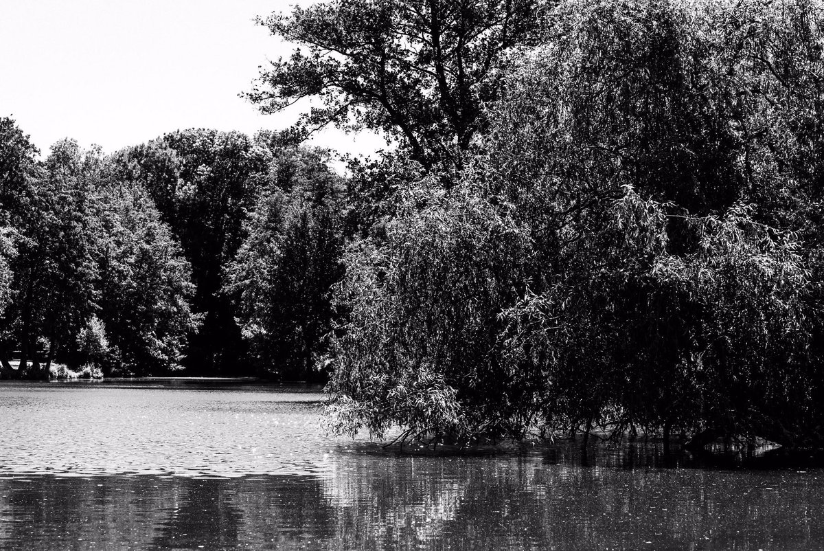 #pond #nature #water #lake #naturephotography #photography #naturelovers #naturephotography #lake #nature #outdoors #pondlife #reflection  #trees #ponds #blackandwhitephotography  #photo #spring #goldfishpond #sunset #blackandwhitepic.twitter.com/j8VjbVXuRy