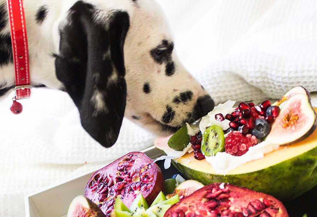 What Vegetables can Dogs eat?  https://gigglepets.net/what-vegetables-can-dogs-eat/ …  #doglover#gigglepetspic.twitter.com/RN1ZJFh1y2