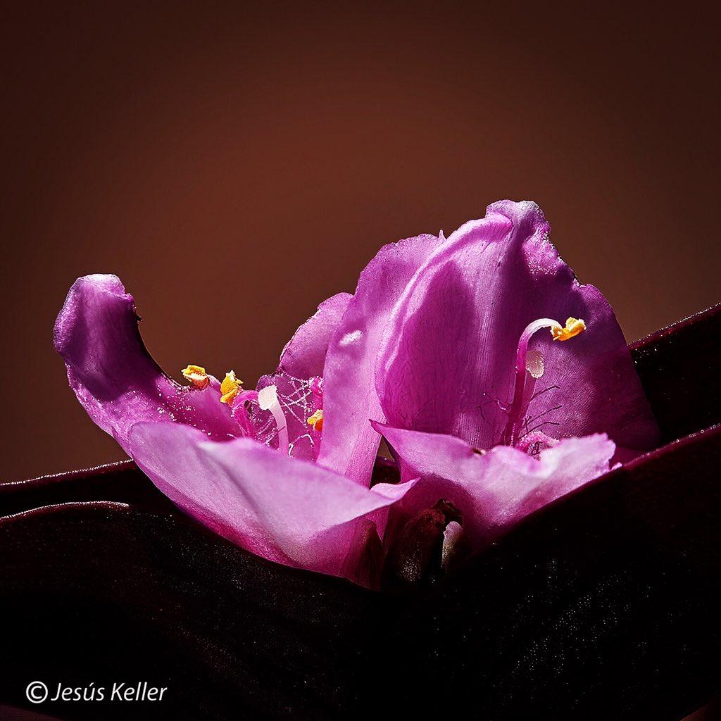 #flores #plantas #floresyplantas  #desdelaventana #desdemiventana #primavera  @canonespana #canonespaña #historiasencasa #canoneos #canoneos1dsmarkiii #canonlens #canonef100400lisusmii #extender14xii f20 1/320s #ıso400 437mm.pic.twitter.com/lnyi9G0kGi