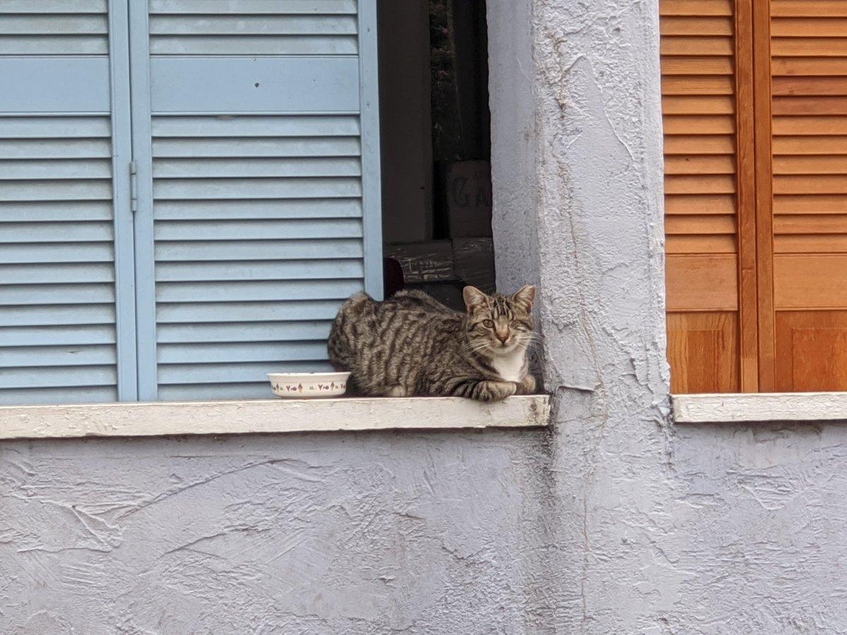Unknown neighborhood cat.