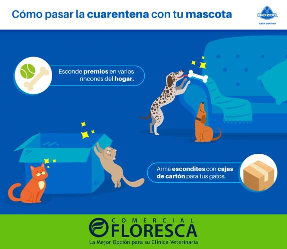 🐕 Las mascotas también se estresan,aquí hay un par de consejos de cómo puedes ayudar a tu perro o gato a pasar esta cuarentena. 🐈  Síguenos en Facebook, Twitter y Whatsapp como @FlorescaOficial   #Covid19 #Covid_19 #mascota #mascotas #Perro #perros #gatos #Gato #mvz #fmvz #MTY