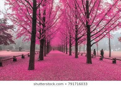 pink tree,nami island in south,korea #korea #nami islandpic.twitter.com/5799vPKVH6