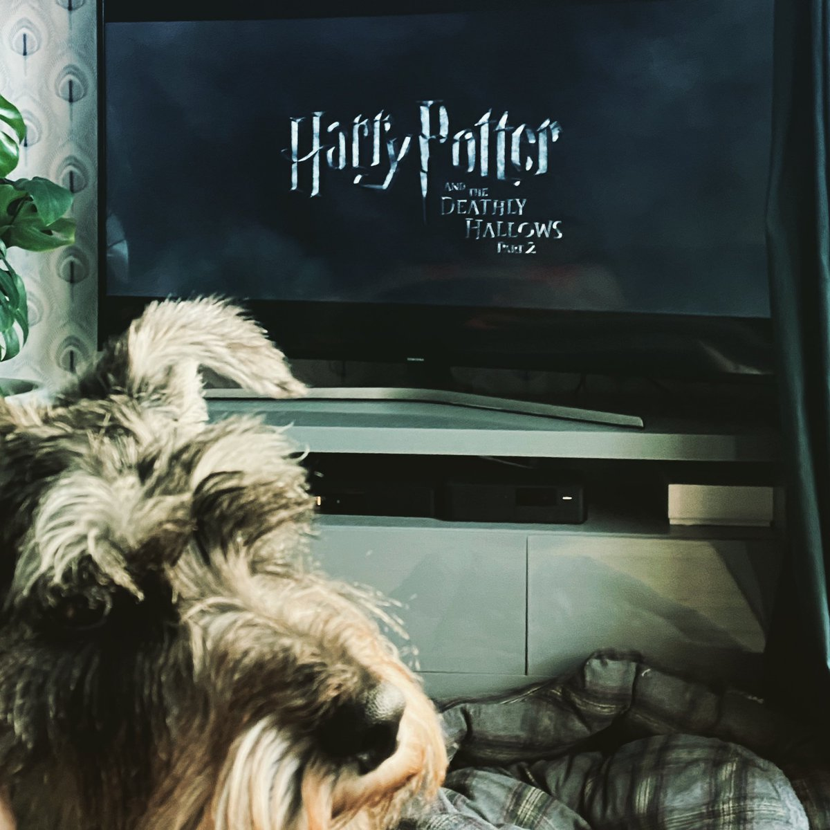 And so we reach the end of our #Potter #Lockdown #Marathon  T'other half (first time of watching) is predicting Ron dies... pic.twitter.com/ylLtOr49zt