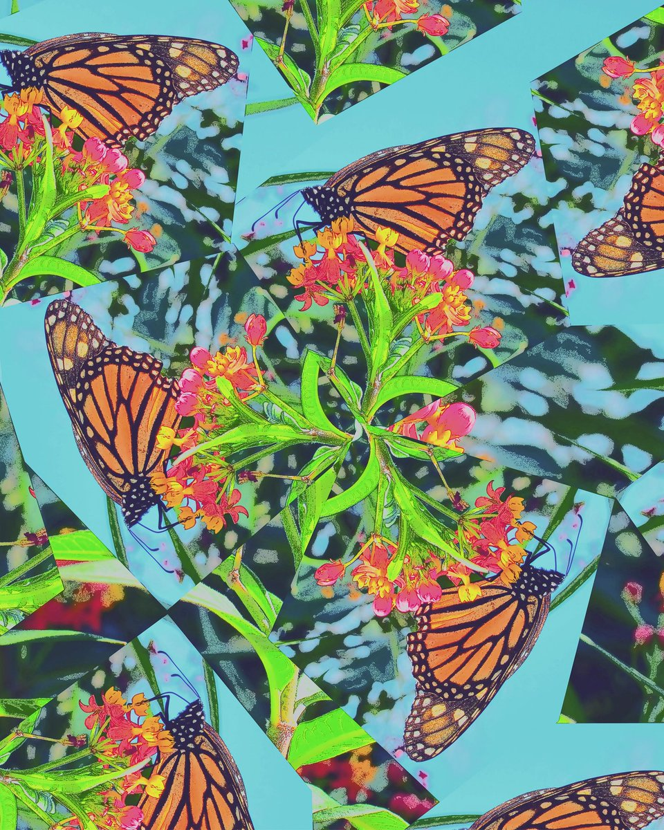 """Tourniquet,"" photo collage.  #monarchbutterfly #art #collage #nature #photography"