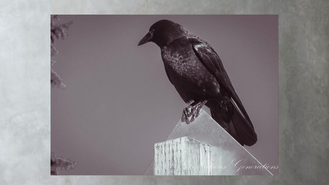 Crow on a Post Canvas - Edmonds, Washington   #homedecor #Walldecor #canvas #canvasart #Natureart #canvasprint #wallart #nature #artwork #wildlife #wildlifephotography