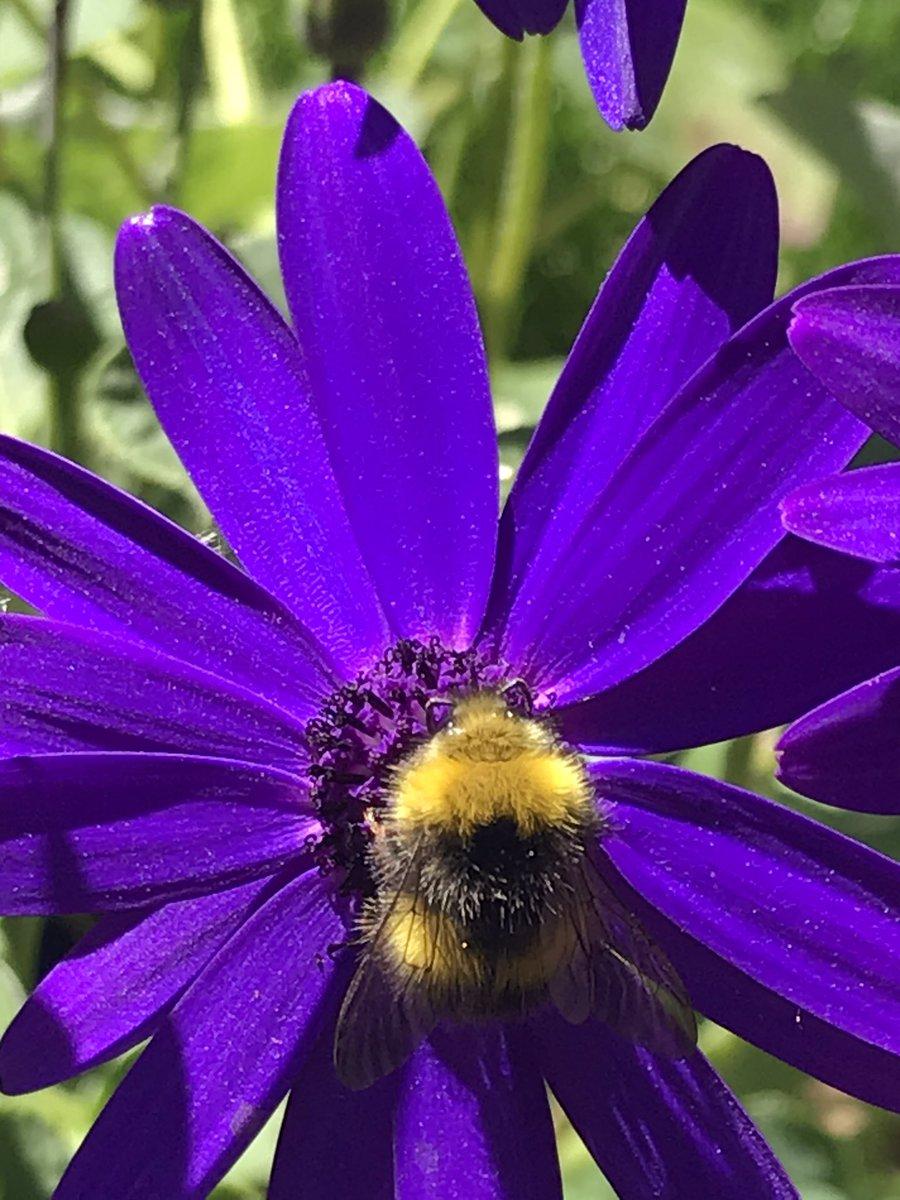 #bees #nature #wildlife #beekind