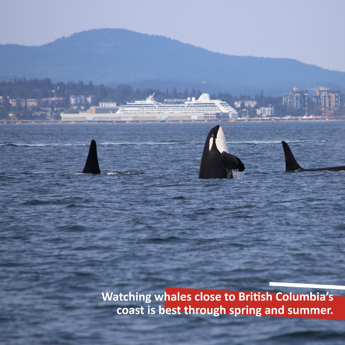 Prime whale watching season close to British Columbia's coast is best through spring and summer.   Have you ever been whale watching?  #beautifulbritishcolumbia #whalewatching   1: Dick Martin 2: Luc Tribolet 3: Thomas Lipke pic.twitter.com/TjgGebfsqG