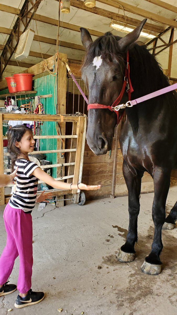 A little girl came to feed my horse apples today. Totally unplanned. #CarpeDiem pic.twitter.com/ZNKWiblrNA