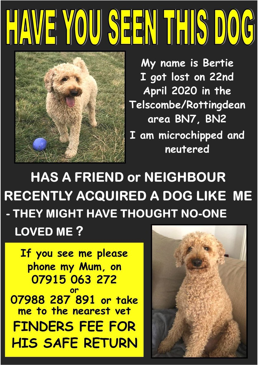 Thank you to our MP @lloyd_rm for his RT and neighbouring MP @mariacaulfield for her ongoing support. Thanks both. It is really appreciated 🙏 and will really help us #findbertie. You have so many followers in the area he was last sighted