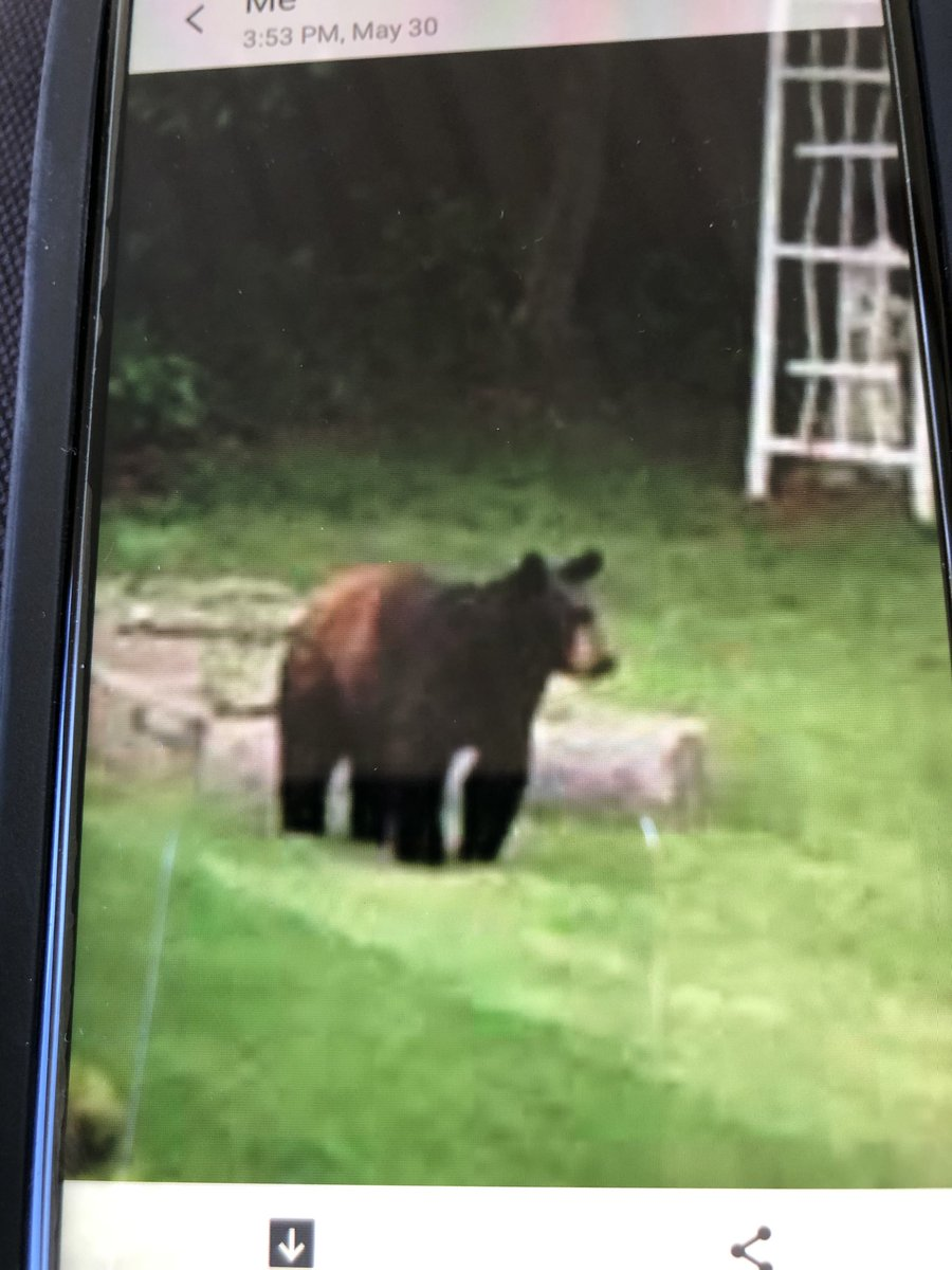 Found a brown bear inspecting the garden. He is very far from the seven acre woods. #citylife pic.twitter.com/c5z5kJ9RBF