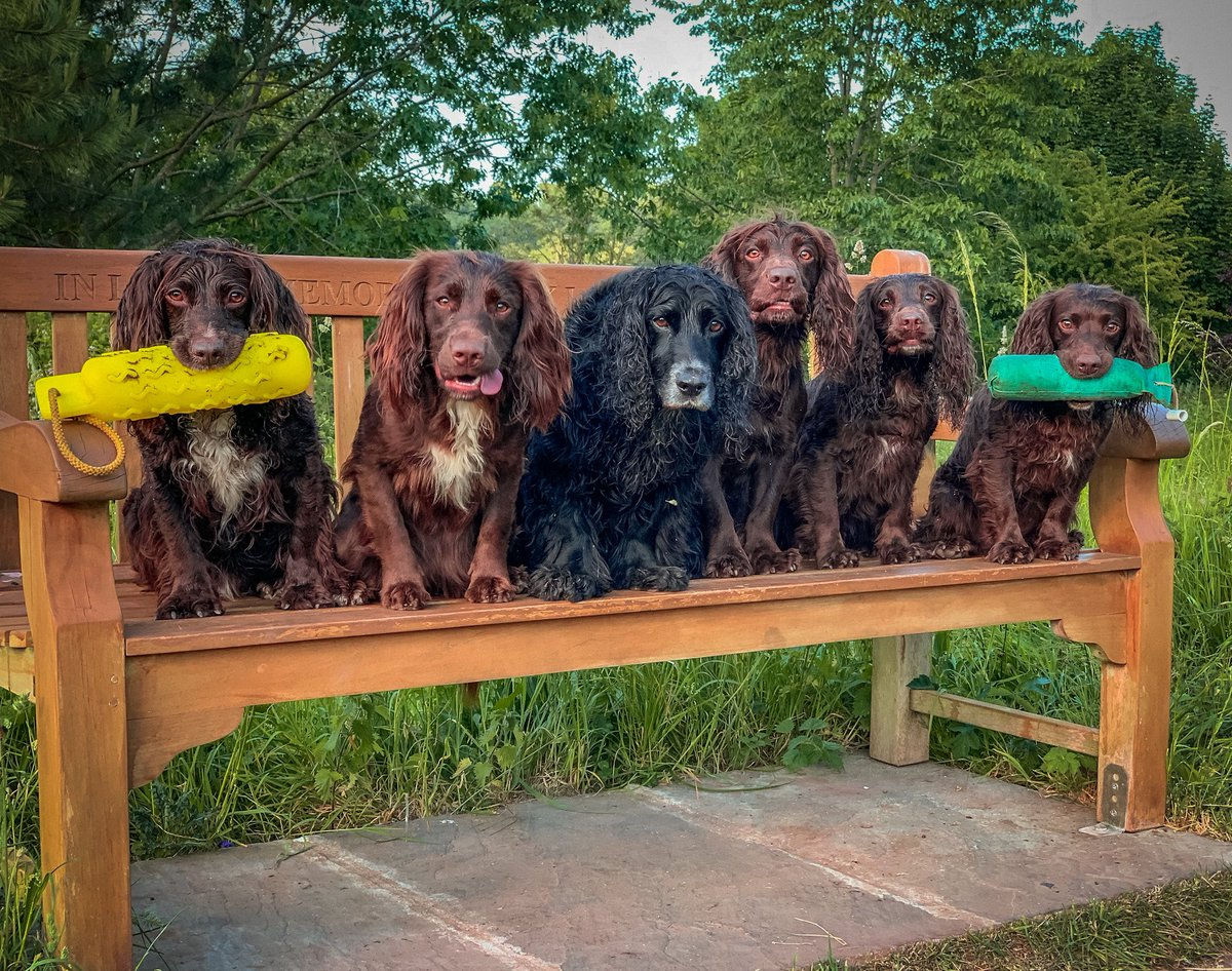 We love a bench photo!  #dogsoftwitter<br>http://pic.twitter.com/Hatr9RLLpG