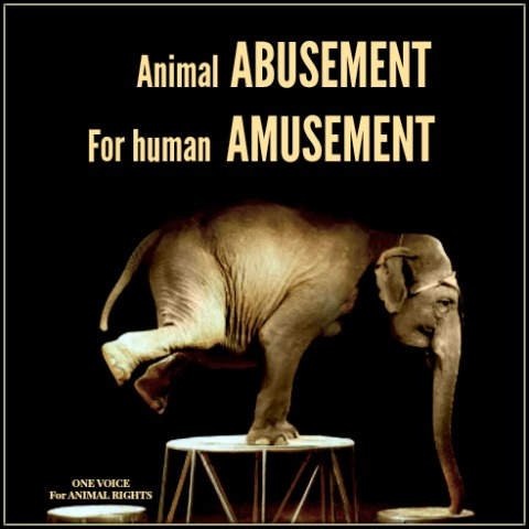 THE HORRORS of CIRCUS ELEPHANT ABUSE https://www.facebook.com/JusticeforCecilTheLionOfficial/photos/pcb.2692786734286303/2692786494286327/?type=3&theater …pic.twitter.com/J7A4SobzjH