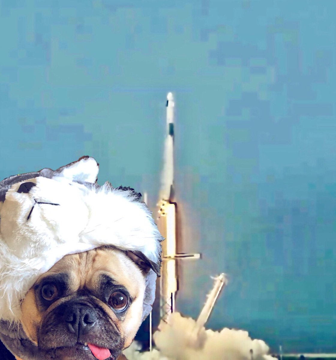 """When I grows up I wants to bee da astronaut!"" -Max  #max #pug #dog #astronaut #space #spacex #tothemoonandback #fly #rocket #spacestation #launch #zen #elonmusk #nasa #capecanaveral #kennedyspacecenter #spacecoast #doglover #puglover #hugs #kisses #loveyoutothemoonandback pic.twitter.com/QC8mPxW0xB"