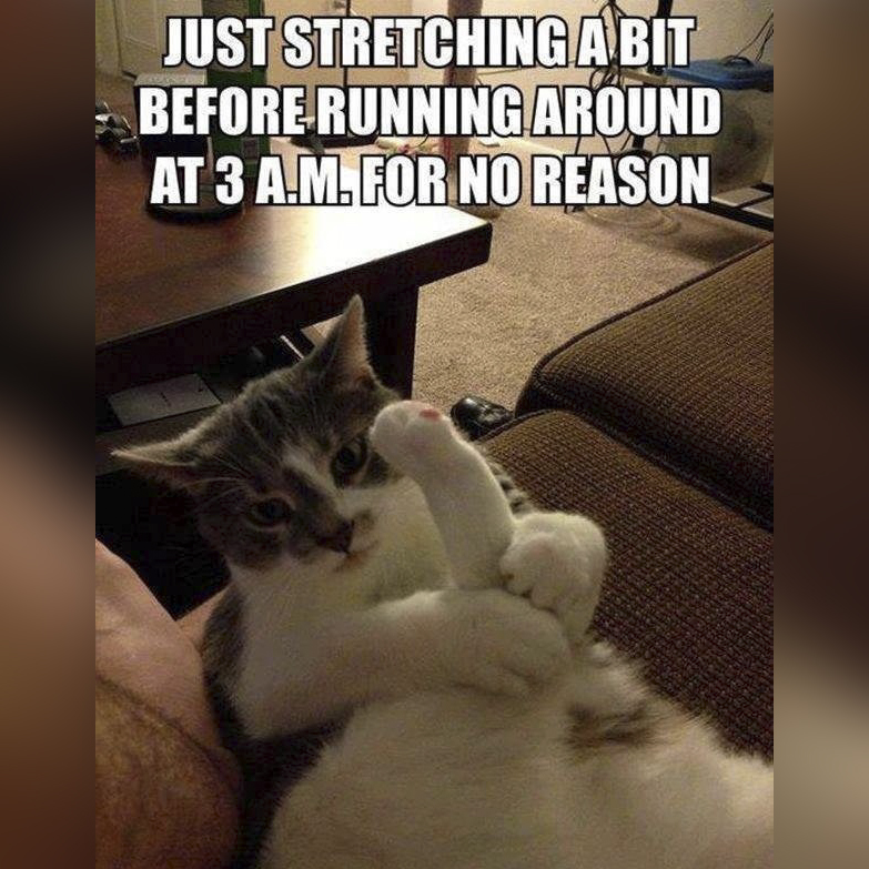 Stretching saves you some vet bills, likely, so really, we should be thanking them...?  #Caturday<br>http://pic.twitter.com/m05DVVjcWQ