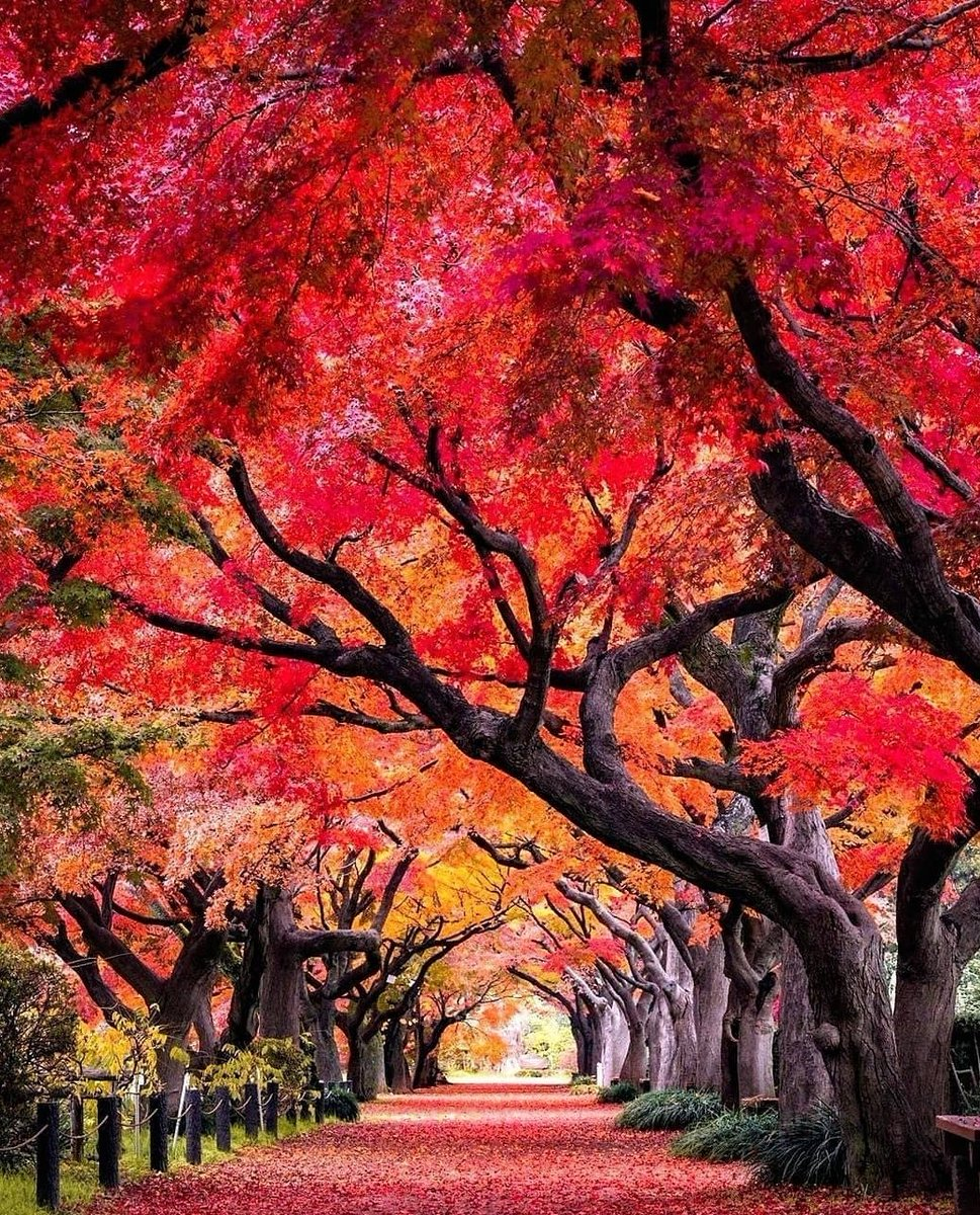#Hakusan #Japan awesome and nice  colors  I like so much ( traveler_sui) pic.twitter.com/STGsh9p8Kf