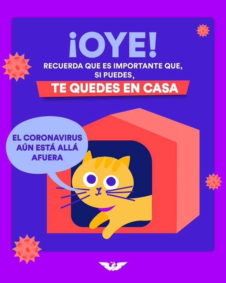 Hazle caso a este lindo gatito y #QuédateEnCasa. Recuerda que nos encontramos en la fase 3 y el riesgo de contagiarte de #coronavirus es alto, por ello sigue las medidas de sanidad, así cuidarás de ti y de los que más quieres. https://t.co/z9OCpZ24ZW