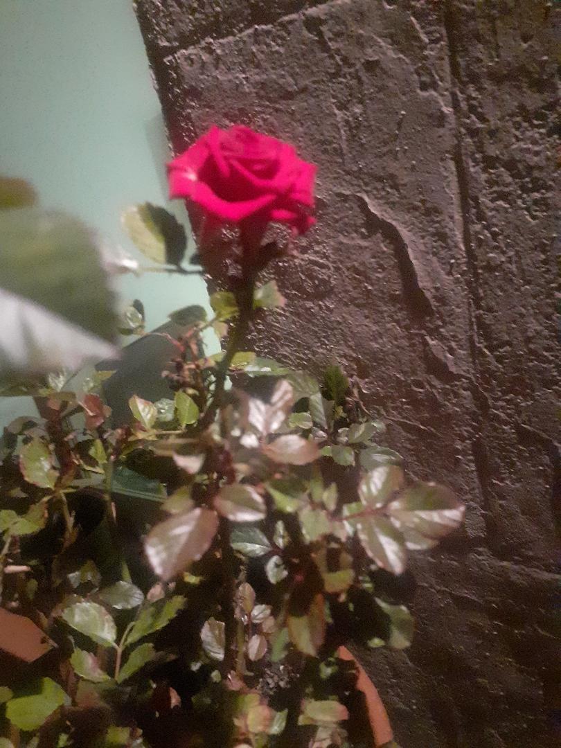 #rosavientos Foto