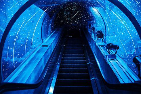 実現してほしいこんな水族館あったらいいな 星空と星座が観察できる水族館のアイデアに「発想がすごい」「きれいすぎて感動」