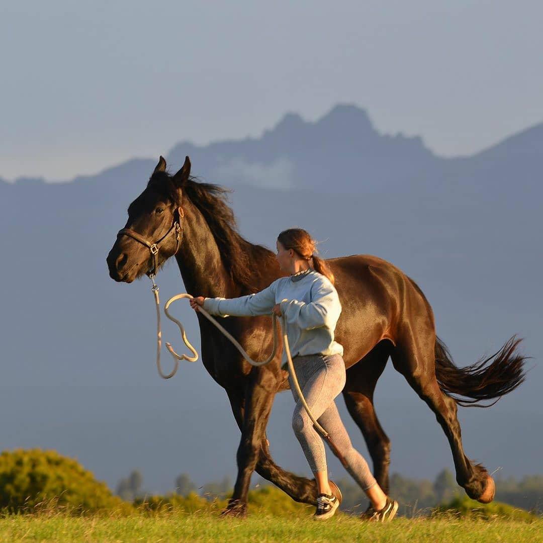 Beautiful capture from Olepangi Farm. Have a lovely Sunday!  #olepangifarm #mtkenya #lovelaikipia #fresianhorse #siraistud #horse #horsesofinstagram #horses #horselove #horseriding   #mountainsarecalling #mountainviews #wildlifeonearth #wildlifeplanet #mountainview https://t.co/glzVlccEgQ