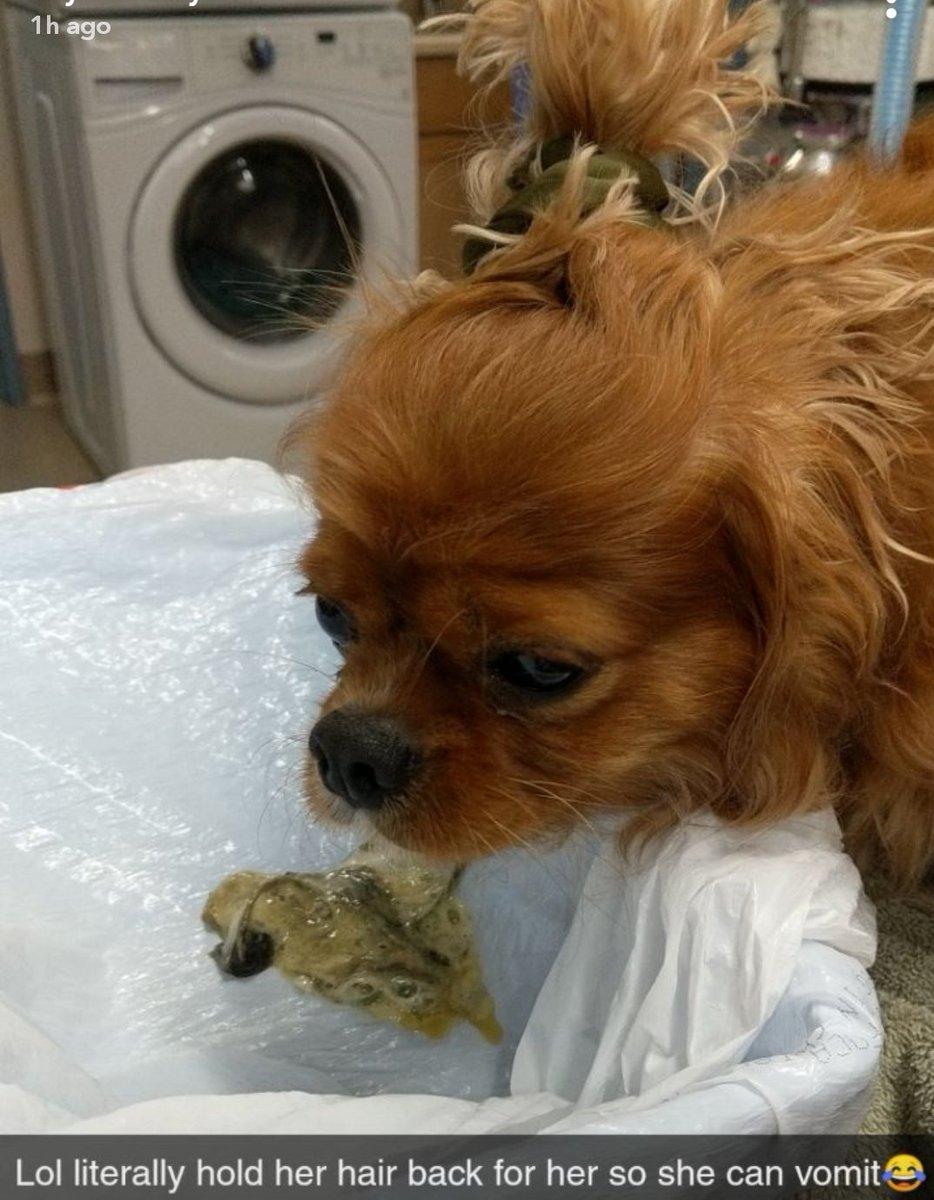 my best friend's a vet <br>http://pic.twitter.com/U6dNDv0Czd