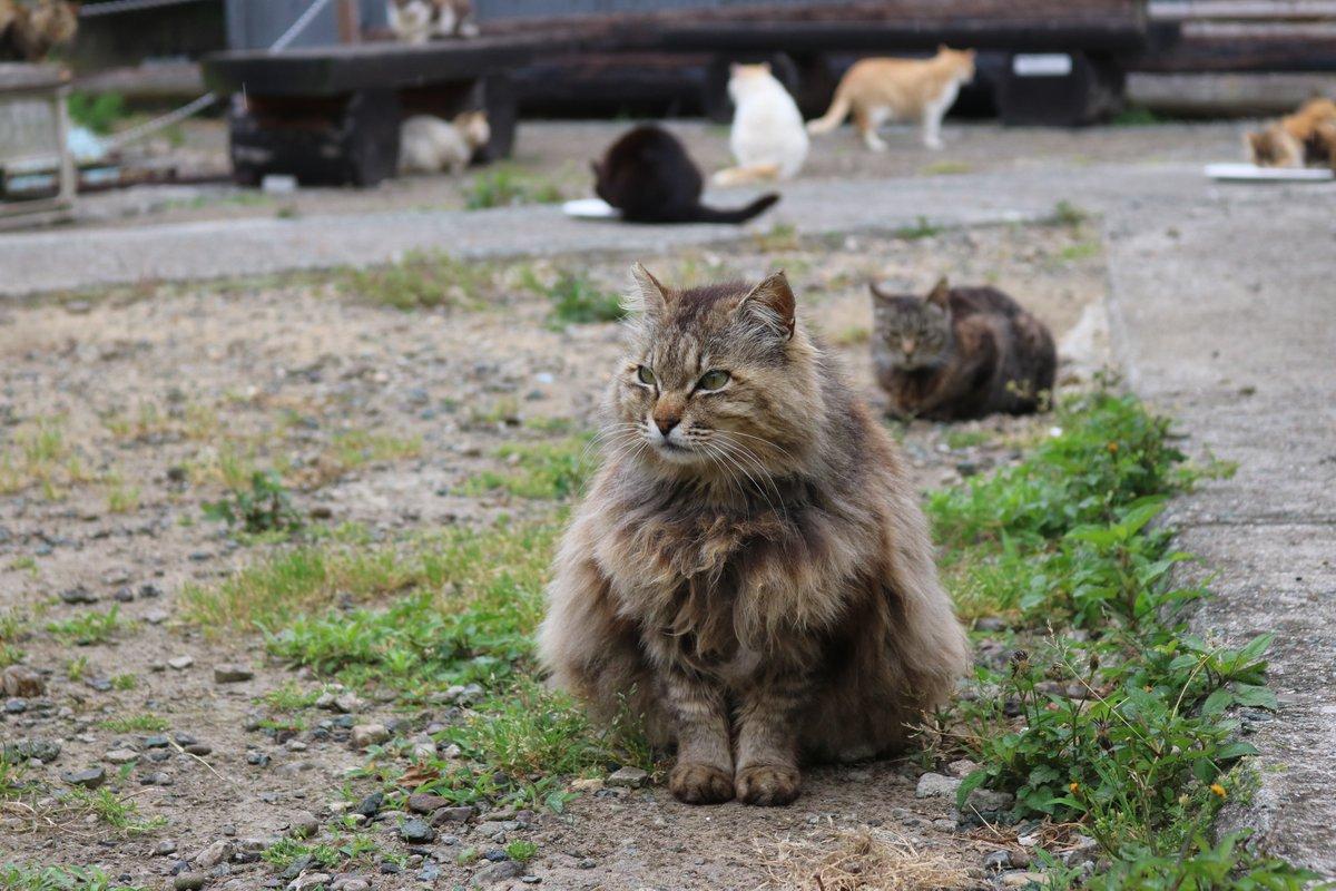 この猫たちの座り方は「エジプト座り」と言います。モフモフ猫は、これからの季節、暑いと思います。