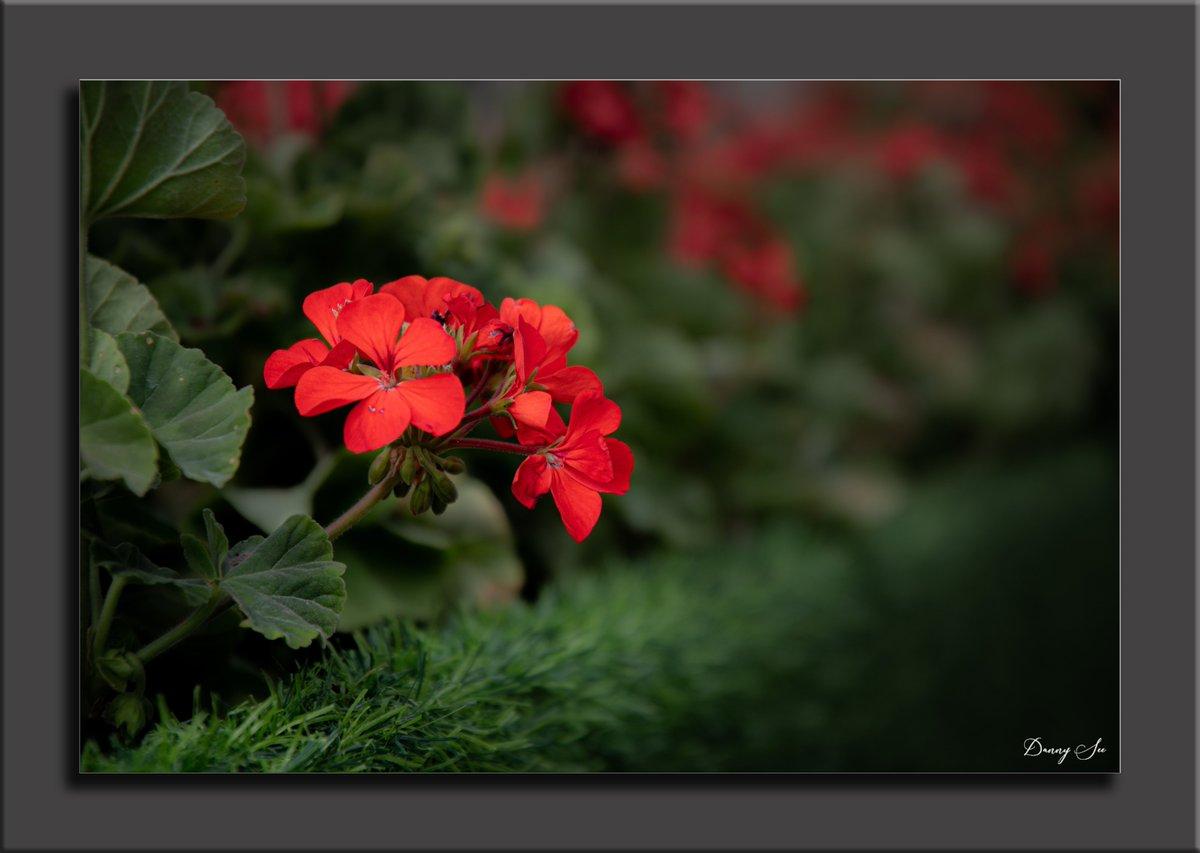 Lovely flowers! #fineart #fineartphotography #art #photography #conceptualart #contemporaryart #bnw #concept  #artist #conceptart  #modernart #creative  #fineart  #photooftheday #artwork #VisualArt #Flowers #nature #yunnan #bloom #petal #gardenpic.twitter.com/x4iRNubOVH