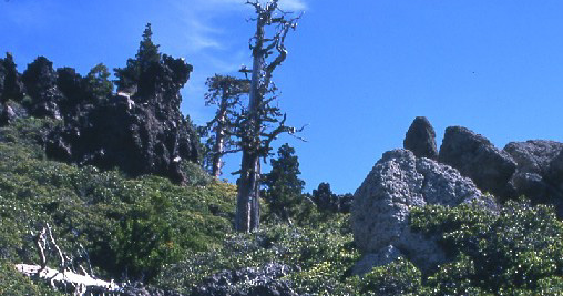 Day hike amid eerie gargoyle-shaped rock formations in Sierra Nevada #sierranevada #adventurelife #stayandwander http://hikeswithtykes.blogspot.com/2013/12/day-hike-amid-eerie-gargoyle-shaped.html …pic.twitter.com/qj1ucptK1O