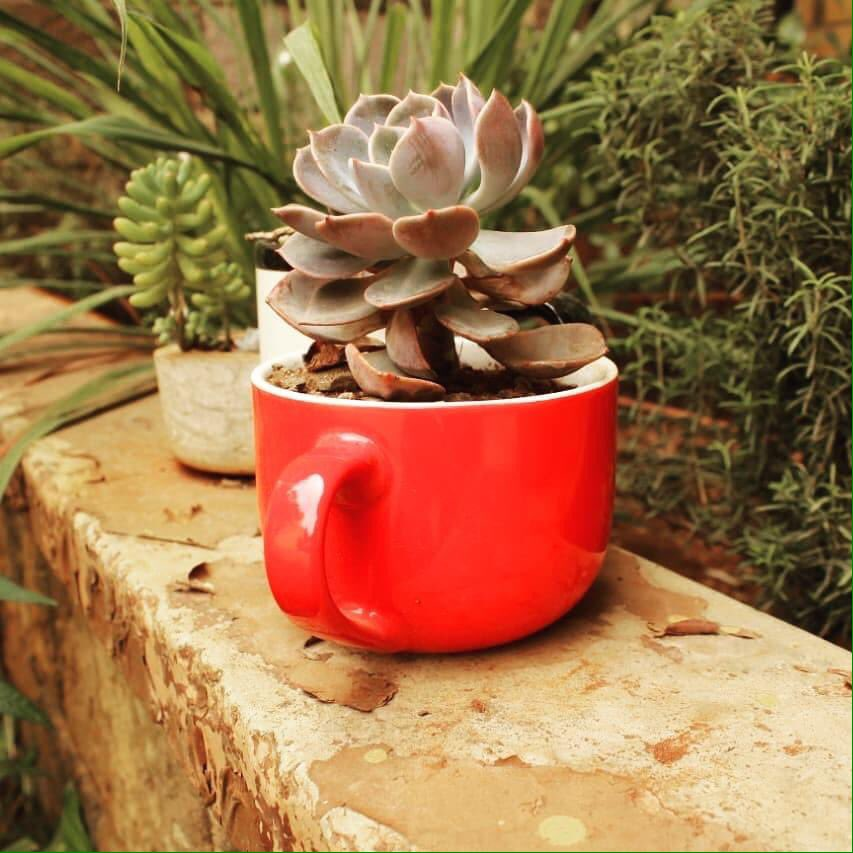 Broken, chipped mugs... Well lets transform them into planters and voila