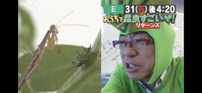 ぜ おうち すごい で 昆虫