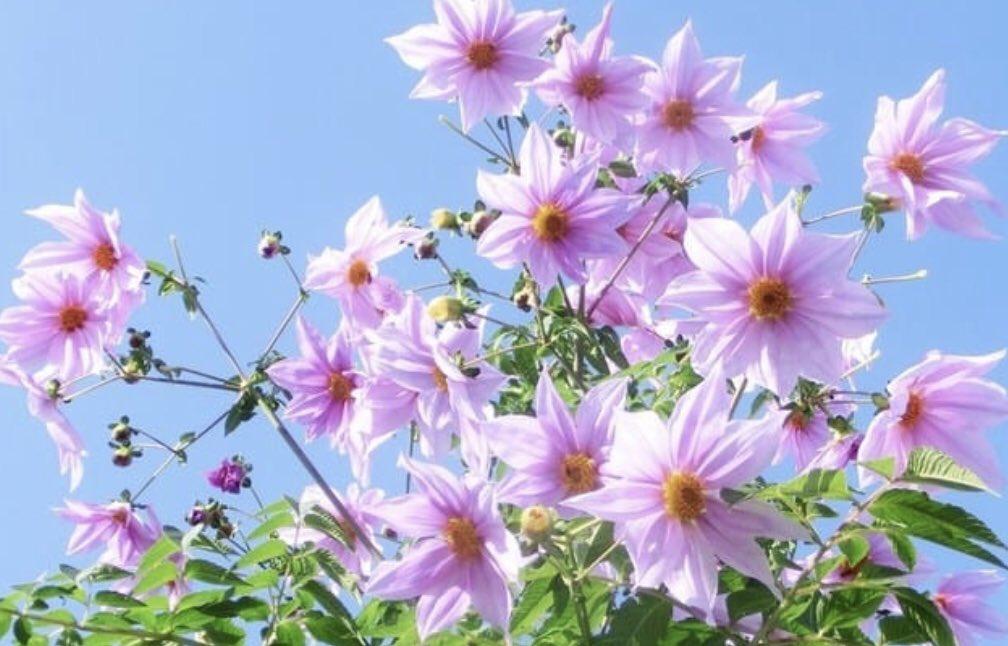 母の愛が溢れて最強に強かった溢れてこぼれるくらいの愛に包まれた花は愛らしく綺麗だった。皆さん皆さんが愛した花は愛らしく綺麗だったよ!!花の思い出を素敵に育てて行こうよ。愛らしい思い出を育てていこう