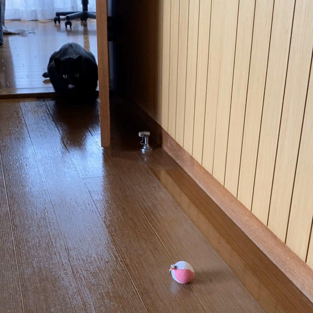 キッチンでコーヒー入れて部屋に戻ってきたら、部屋の入り口で(隠れたつもりで)ボールを狙ってる子がいたので邪魔しないように離れたところで待ってたんだけど、かれこれ3分くらいずっとこの調子で、ねこ・ボール・飼い主の三つ巴膠着状態が続いている