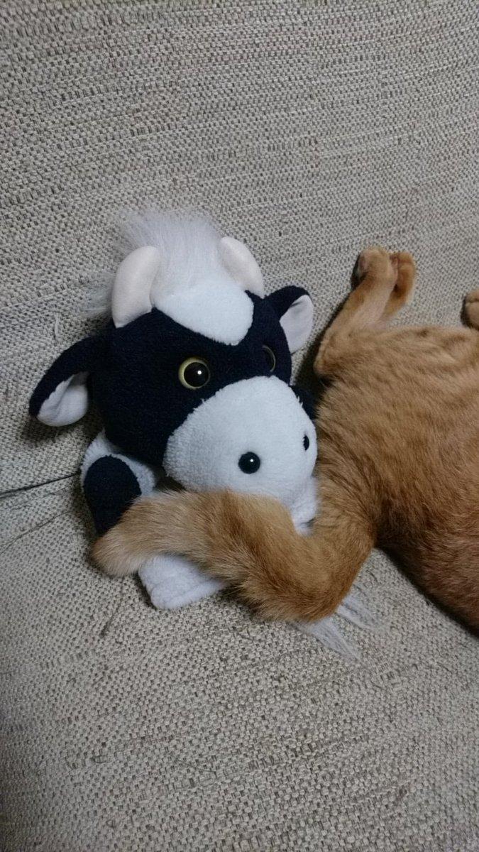 起きたら顔のそばに尻。#うしです #ねこ #猫 #猫あるある
