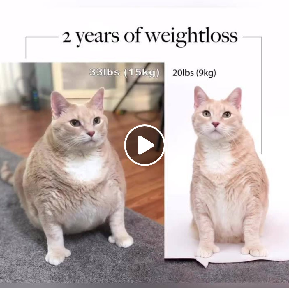 мотивирам се с weight loss клипчета  ..на котки pic.twitter.com/4ToNowTqwE