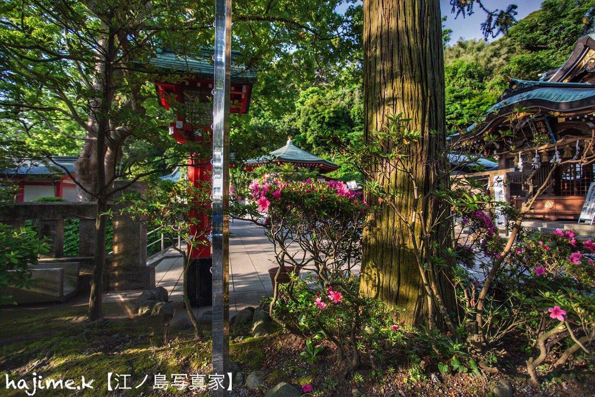 辺津宮のツツジ #ファインダー越しの私の世界 #写真好きな人と繋がりたい #江の島 #湘南 #藤沢市pic.twitter.com/HJA0ZThMgi