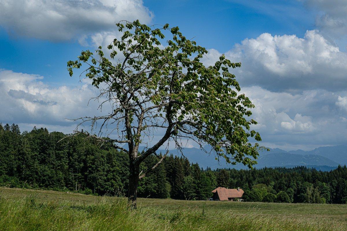 Un arbre, une maison, la nature... #travelphotography #landscapephotography #fujixt3 #fujinon35mm #fujifilm #fujifilm_ch #Switzerland #Suisse  #IgersLausanne #MyVaud #MySwitzerland #Swissphotographer #royalphotographicsociety #rpsdocpic.twitter.com/Nl066Kbh25