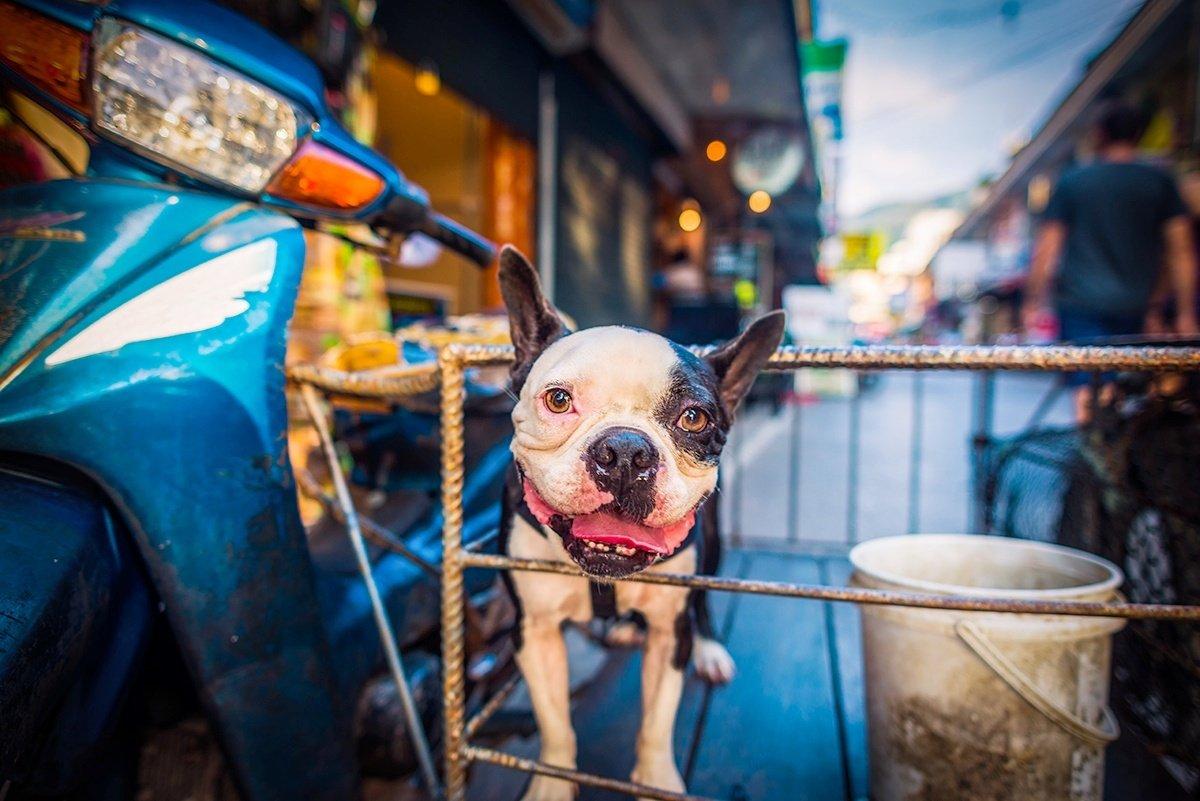 Waiting for his next ride on Bangkok streets Nikon D800&24mm/1.8GED  #nikon #nikonphotography #sundayvibes #photo #photooftheday #photographer #travelphotography #streetphoto #photography @NikonUSA @NikonEurope @ThePhotoHour @LensAreLive @NikonProEurope #Dog #bikeridepic.twitter.com/Irm5h5cvSY