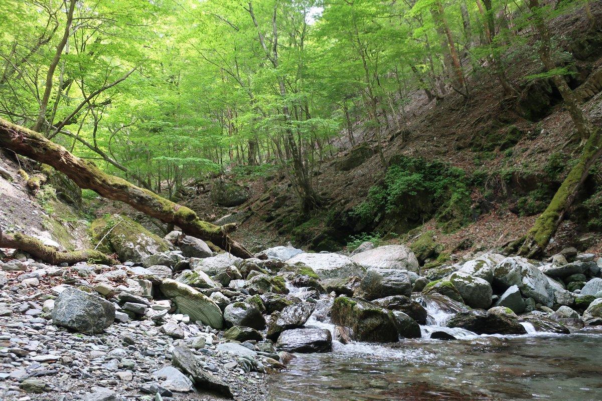 久しぶりの山へ。 新緑が眩しい。 #山の写真 #森の写真 #三嶺 #トレラン https://t.co/hy4ttWpWYR