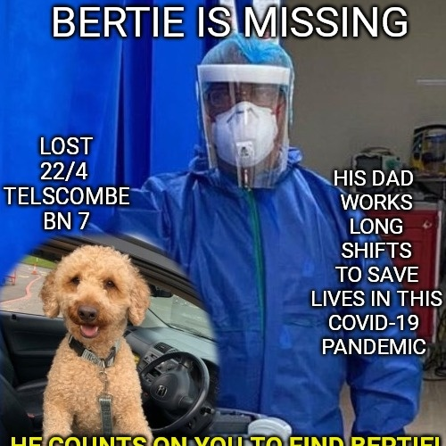 🐕Please plz will u guys RT for us @moresussex to help in our search for missing Bertie from Telscombe BN7 East Sussex #FindBertie who has been gone almost 40 days+40 nights🐾🐶Your rt/a follower of yours may be the one that finds him @djnickosborne @daveadamsradio @Lou_Nash 🐾