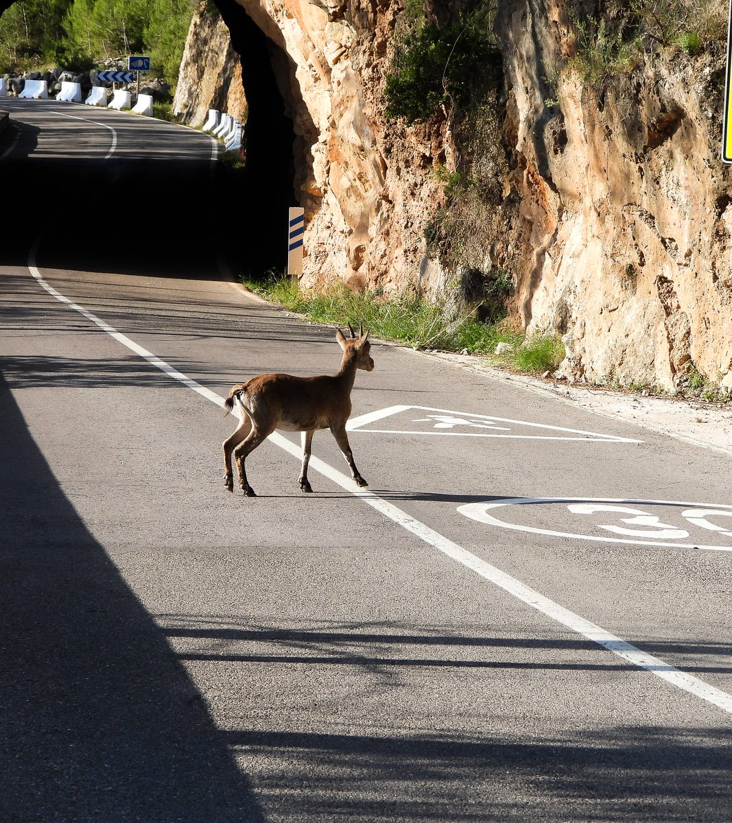 #fauna #deer #tunel #AnimalCrossing #landscapelovers ..deer crossing with no problem...no people molesting pic.twitter.com/zSCUedwNsy  by mario