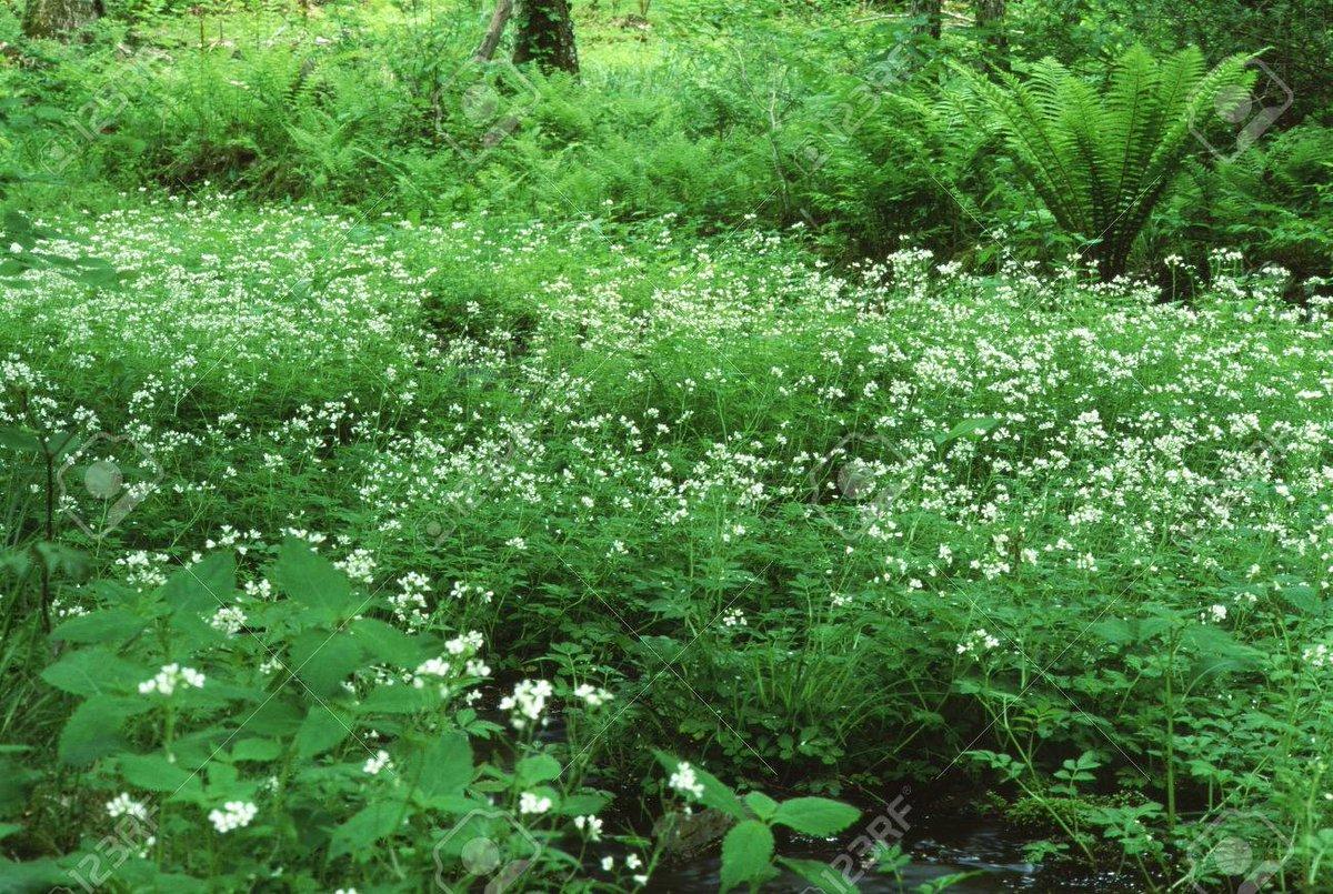 初夏の森 撮影地:長野県長和町(旧和田村) https://jp.123rf.com/photo_75409548_forest-of-early-summer.html…pic.twitter.com/VnmivihTb8