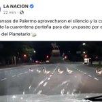 Image for the Tweet beginning: Leí «los gansos de Palermo