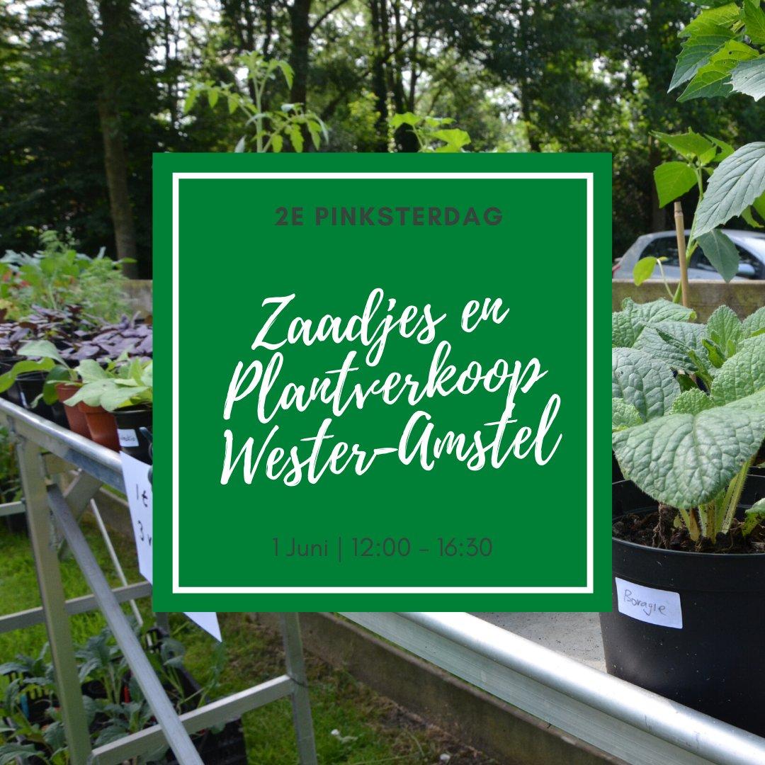 Morgen, op tweede Pinksterdag, verkopen we plantjes en zaden uit onze tuinen! Kom gezellig langs en laten we allemaal van het heerlijke zonnetje genieten (op gepaste afstand natuurlijk). Iedereen is van harte welkom van 12:00 tot 16:30.  #Netherlands #Amsterdam #Amstellandpic.twitter.com/Zk7o2Ur7PH