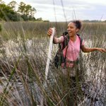 #BlackBirdersWeek IS HERE!!!!!!!!!  DAY 1:  If you are a Black nature enthusiast, we want to see you!! Share your pics using the hashtag #BlackInNature!   #RepresentationMatters, and I know that from firsthand experience! So, here I am, #BlackAFinSTEM, hip-deep in the marsh! 💚