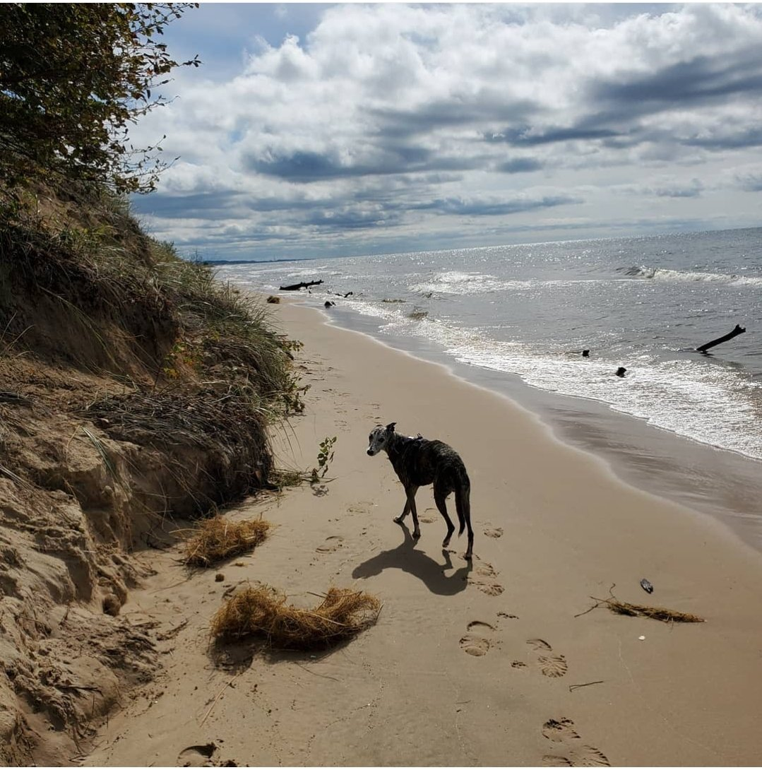 #randomcritterphoto from my phone day 72/ Wander #dogsoftwitter #dogs #LakeMichigan