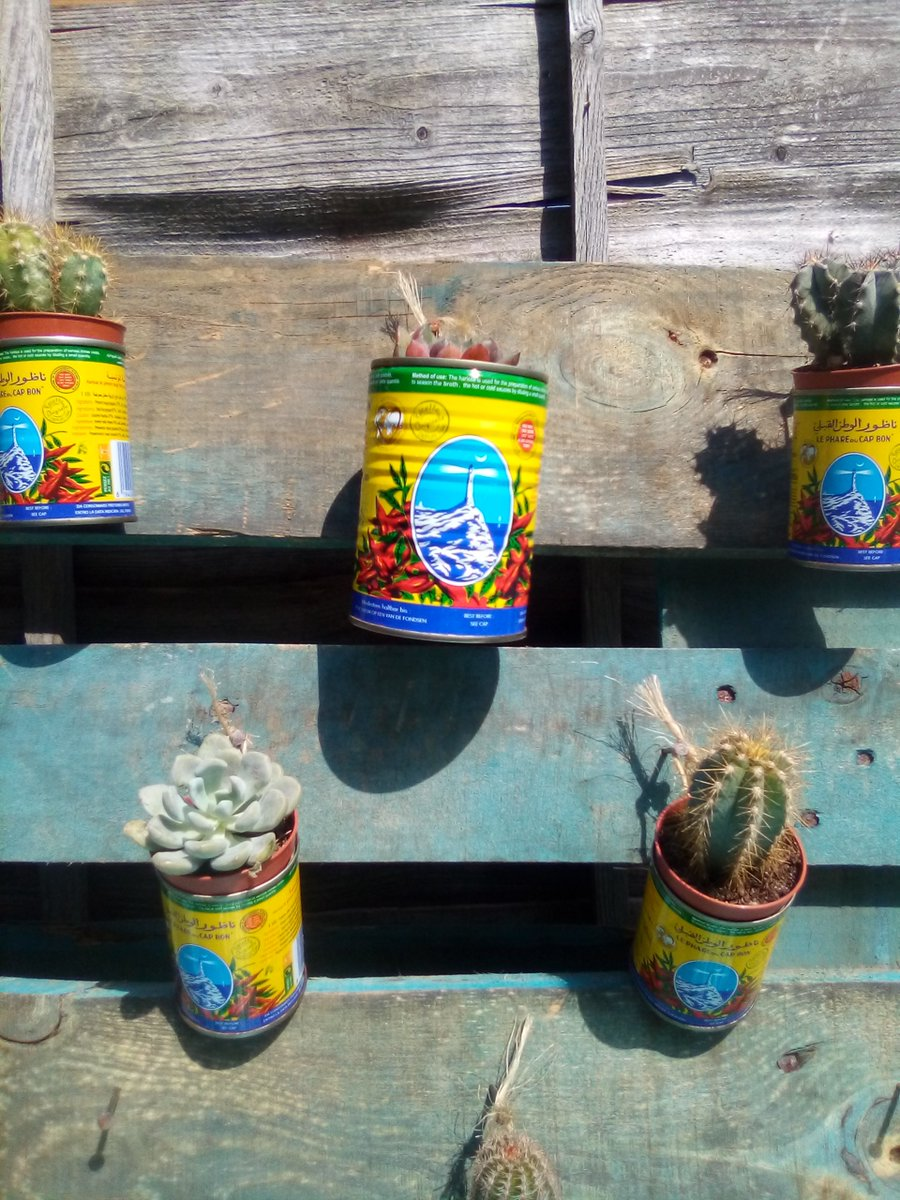 """My rustic garden """"project"""", made from a bit of discarded pallet is nearly complete (cacti from @bedfordmarkets1 ) Just need to devour a couple more tins of harissa (shouldn't be a problem!) #rustic #garden #project #lockdown #hobbies #pallet #harissa #upcycle #Recycle #zerowaste"""