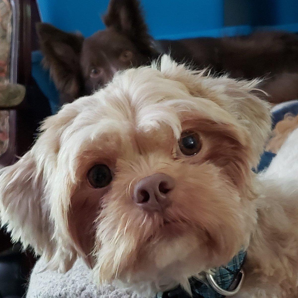 Seeing double today #dog #muppetdog #dogface #dogfaces #dogeye #dogeyes #doglooks #doggo #doggy #fluffydog #restingdogspic.twitter.com/i9JcMlxQgE