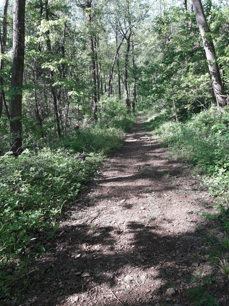 1/2 Trillium Trail in GR Thompson Wildlife Management Area #hiking #Shenandoah #nature https://t.co/gTMzRWsEAY